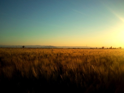 evening field