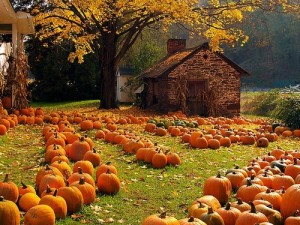 autumn-pumpkins-tumblr-1
