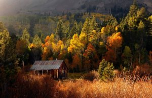 cabin_in_the_woods_by_kayaksailor-d5h9i58