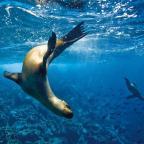 Summer Snorkeling Adventures